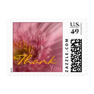 Pink Gerbera • Thank You Stamp