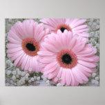 Pink Gerberas Print