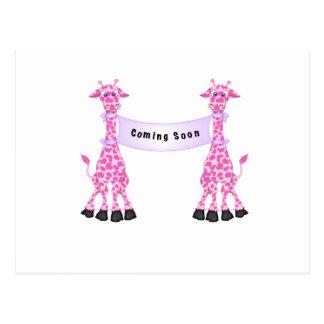 Pink Giraffes Coming Soon Postcard