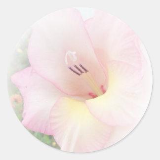 Pink gladiola classic round sticker