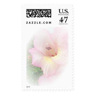 Pink gladiola stamp