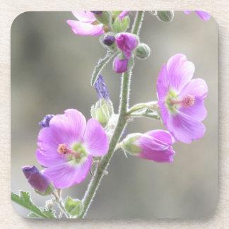 Pink Globe Mallow Wildflowers Beverage Coasters