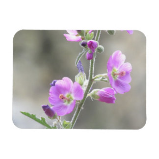 Pink Globe Mallow Wildflowers Magnet