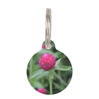 Pink Gomphrena Flower Pet ID Tags