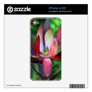 Pink, green & cream Leucadendron Skin For iPhone 4