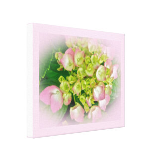 Pink & Green Hydrangea Flowers Canvas Print