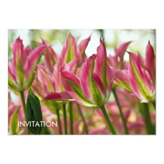 Pink & Green Variegated Tulips DSC0796 Card