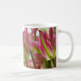 Pink & Green Variegated Tulips DSC0796 Coffee Mug
