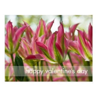 Pink & Green Variegated Tulips DSC0796 Postcard