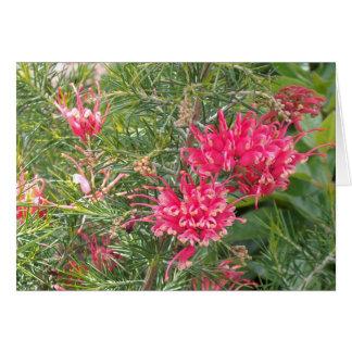 Pink Grevillea Flowers Card