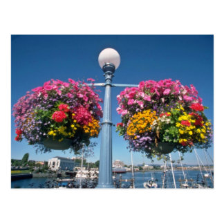 Pink Hanging flowers, Victoria flowers Postcard
