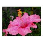 Pink Hawaii Hibiscus Post Cards