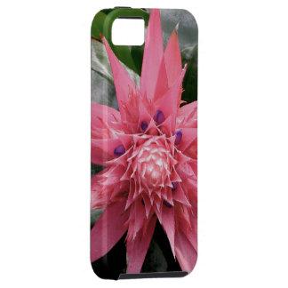 Pink Hawaiian Bromeliad Flower iPhone SE/5/5s Case