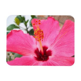 Pink Hbiscus Magnet