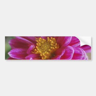 Pink Heart Dahlia Bumper Stickers