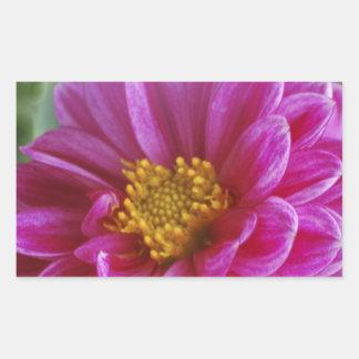 Pink Heart Dahlia Rectangular Sticker