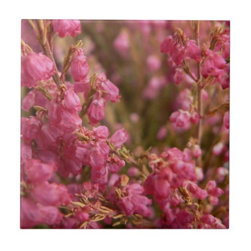 Pink Heather flowers Small Square Tile