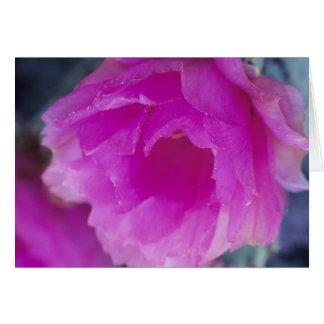 Pink Hedgehog Cactus blossom (Echinocereus Card