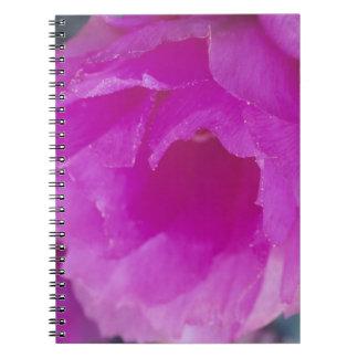 Pink Hedgehog Cactus blossom (Echinocereus Notebook