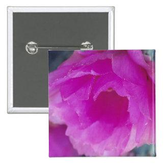 Pink Hedgehog Cactus blossom (Echinocereus Pinback Button