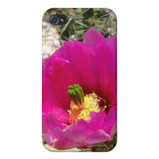 Pink hedgehog cactus flower iPhone 4 case