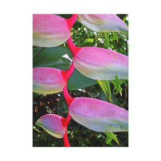 Pink Heliconia Canvas Print