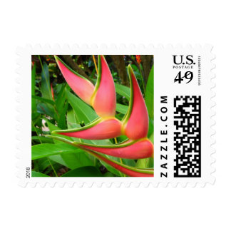 Pink Heliconia Tropical Flower Wedding Postage