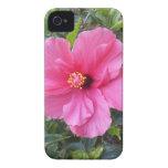 Pink Hibiscus Blackberry Bold case