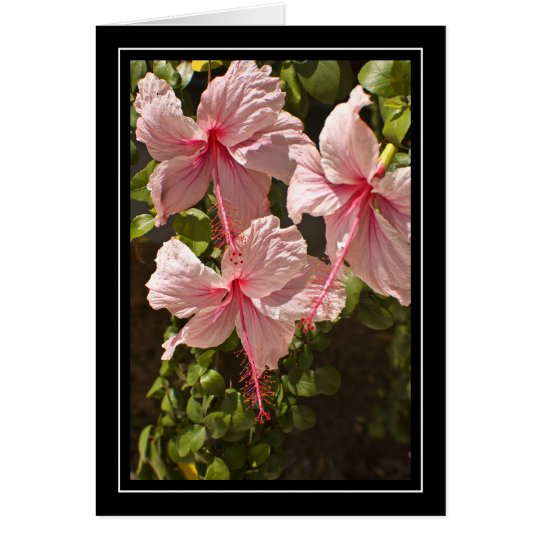 Pink Hibiscus Blank Card