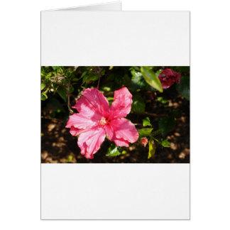 Pink hibiscus card
