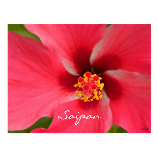 Pink Hibiscus Center Postcard