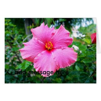 Pink_Hibiscus,_Dew_Drops,_ Card
