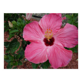 Pink Hibiscus Floral Flower Nature Poster Art Pic