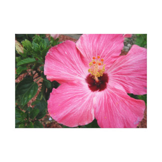 Pink Hibiscus Floral Flower Photography Canvas Pic Gallery Wrap Canvas
