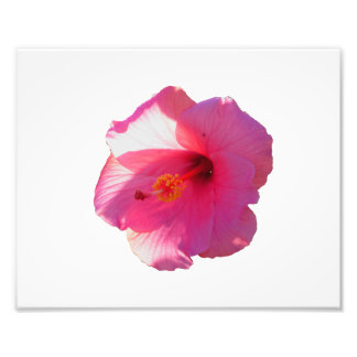 pink hibiscus flower image photo print