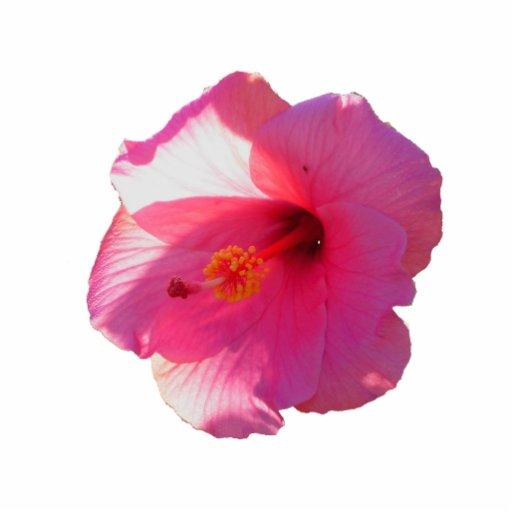 Printable Hibiscus Flower Template