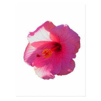 pink hibiscus flower image postcard