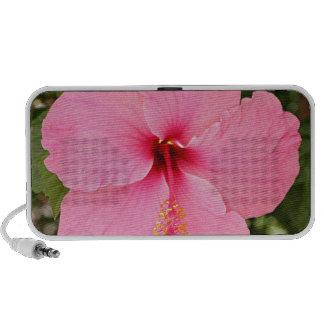 Pink Hibiscus flower in bloom Notebook Speaker