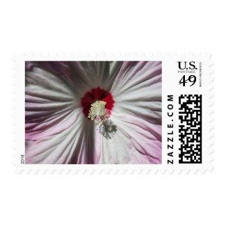 Pink Hibiscus Flower Postage