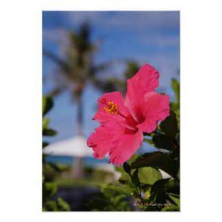 Pink hibiscus flower poster