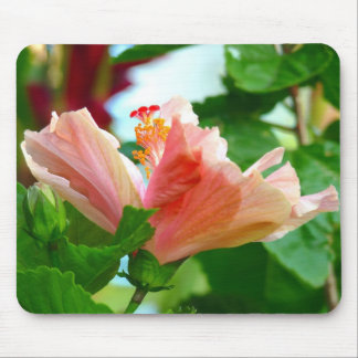 Pink hibiscus from Hawaii Mouse Pad