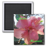 Pink Hibiscus in Hawaii Fridge Magnets