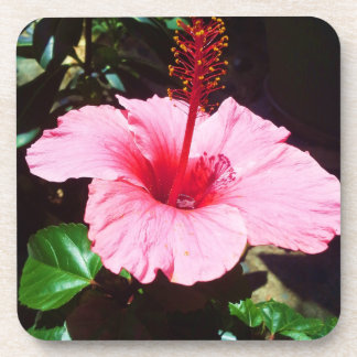 Pink Hibiscus In The Sun Drink Coaster