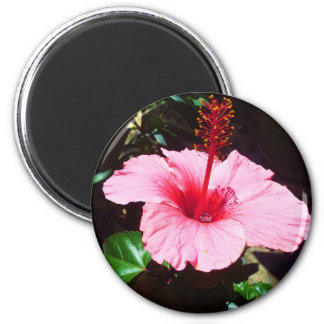 Pink Hibiscus In The Sun 2 Inch Round Magnet