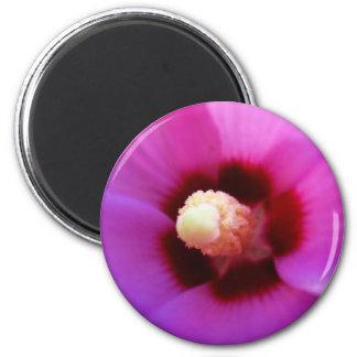 Pink Hibiscus Macro Magnet