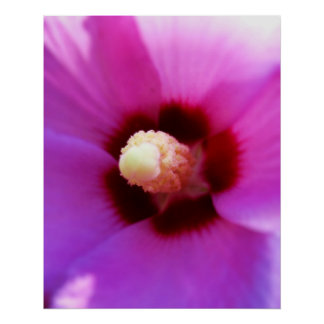 Pink Hibiscus Macro Poster