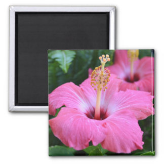 Pink Hibiscus 2 Inch Square Magnet