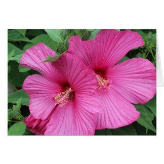 Pink Hibiscus Notecard