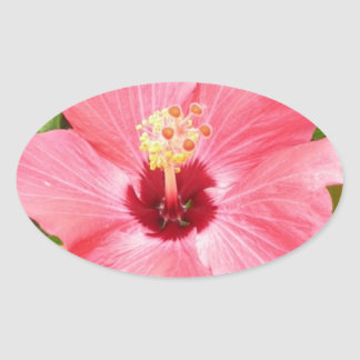 Pink Hibiscus Oval Sticker