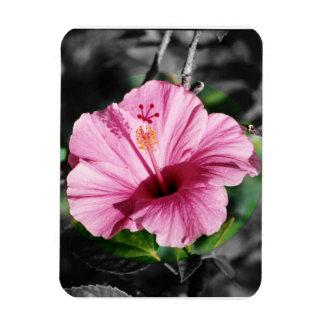 Pink Hibiscus Photo Magnet